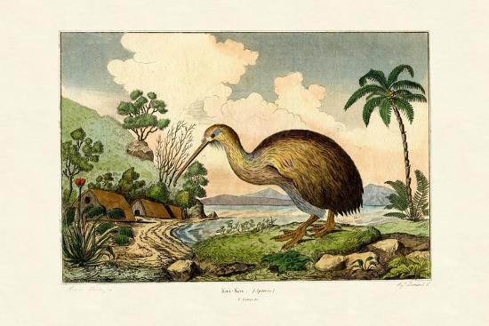kiwi-1833-39