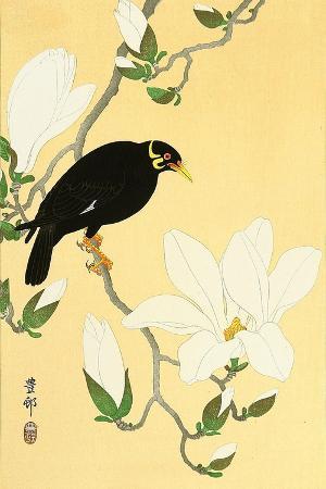 koson-ohara-indian-hill-minor-and-magnolia