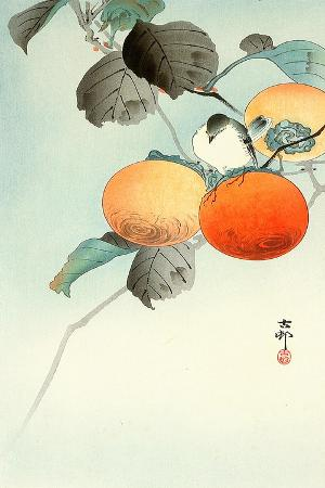 koson-ohara-nuthatcher-atop-persimmon