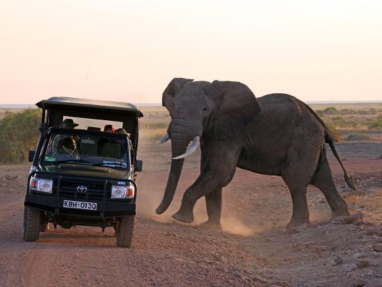 kymri-wilt-elephant-and-jeep-amboseli-kenya