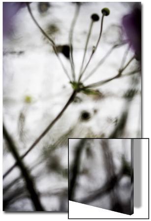 laetizia-bazzoni-vegetal-4174-c-2008