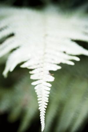 laetizia-bazzoni-vegetal-4196-2008