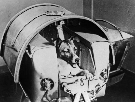 laika-russian-cosmonaut-dog-1957