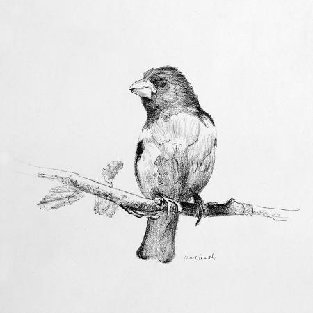 lanie-loreth-bird-drawing-iv