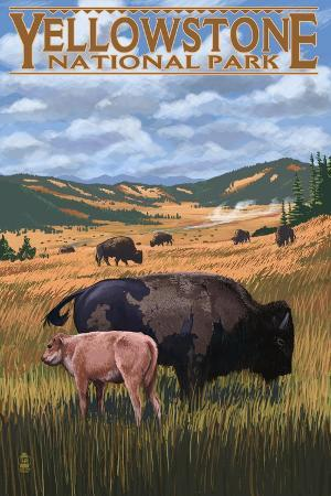 lantern-press-bison-and-calf-grazing-yellowstone-national-park