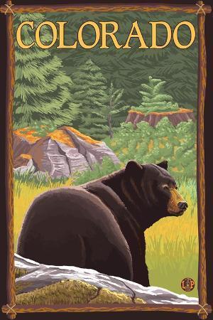 lantern-press-black-bear-in-forest-colorado