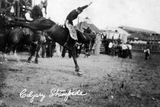 lantern-press-calgary-canada-rodeo-bucking-horse-at-the-stampede