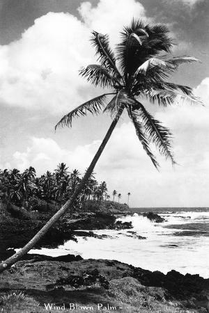 lantern-press-hawaii-palms-along-the-beach