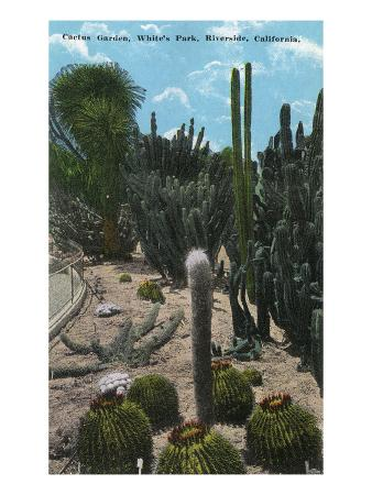 lantern-press-riverside-california-white-s-park-view-of-cactus-garden