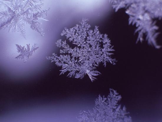 lauree-feldman-snowflakes-on-window