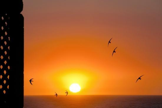 laurent-laveder-swallows-flying-at-sunset