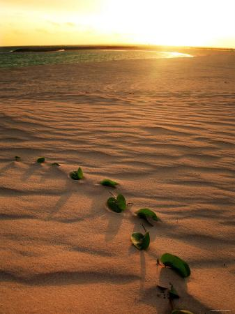 leaves-on-the-dune