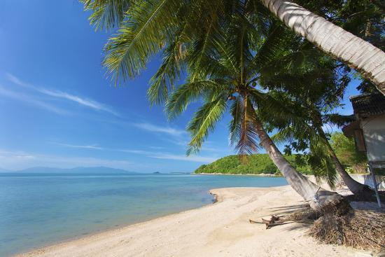 lee-frost-palm-trees-overhanging-bangrak-beach-koh-samui-thailand-southeast-asia-asia