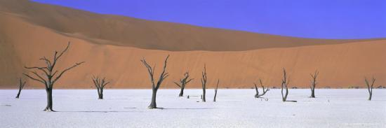 lee-frost-panoramic-view-of-dead-trees-and-orange-sand-dunes-dead-vlei-namib-desert-namibia-africa