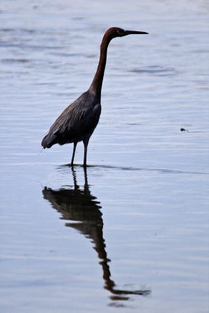 lee-peterson-bird-4