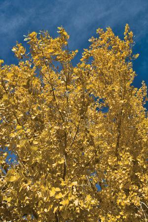 lee-peterson-fall-leaves-1