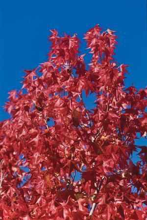 lee-peterson-fall-leaves-4