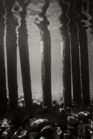 lee-peterson-pier-pilings-5