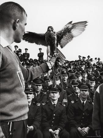 leonard-mccombe-air-force-academy-cadets-watching-handler-performing-with-the-air-force-mascot-a-falcon