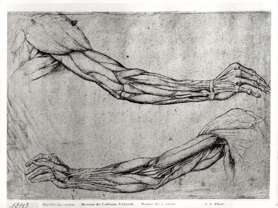 leonardo-da-vinci-study-of-arms