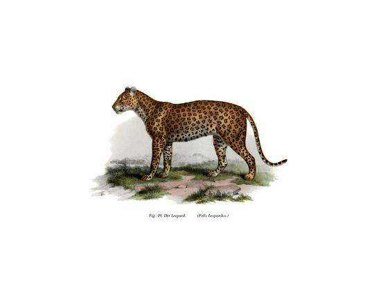leopard-1860