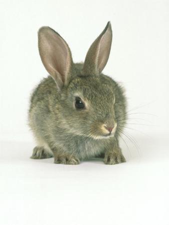 les-stocker-rabbit-aylesbury-uk