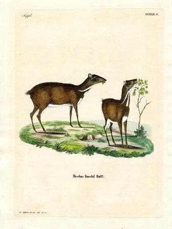 lesser-mouse-deer