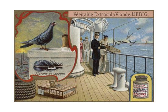 liebig-card-featuring-pigeons