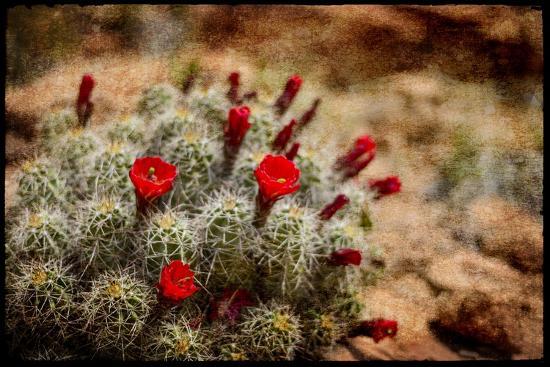 lightboxjournal-desert-flower-3