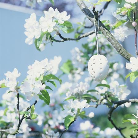 lili-k-easter-egg-on-flowering-branch