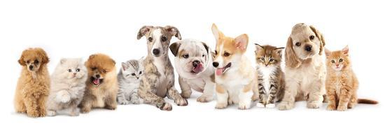 lilun-group-of-puppies-and-kitten-of-different-breeds-cat-and-dog