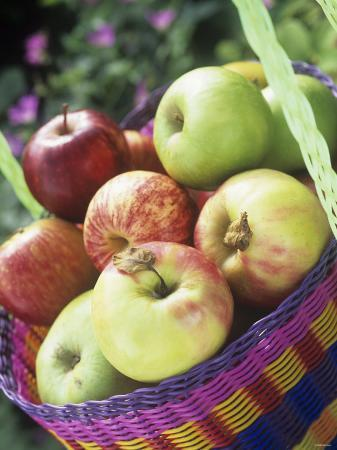 linda-burgess-apples-granny-smith-and-gala-in-a-basket