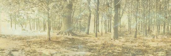 linda-wood-treescape-i