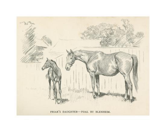 lionel-edwards-friar-s-daughter-foal-by-blenheim