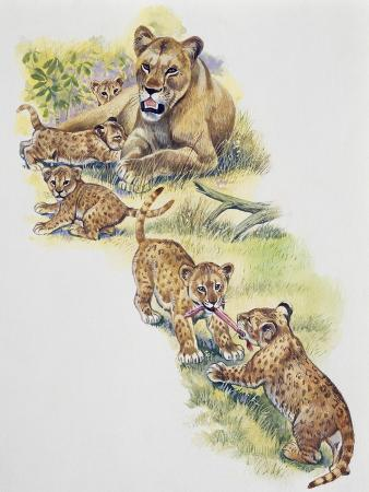 lioness-panthera-leo-with-her-cubs-felidae