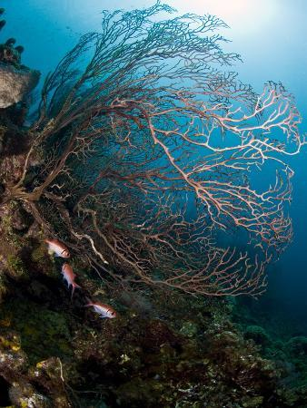 lisa-collins-reef-scene-with-sea-fan-st-lucia-west-indies-caribbean-central-america