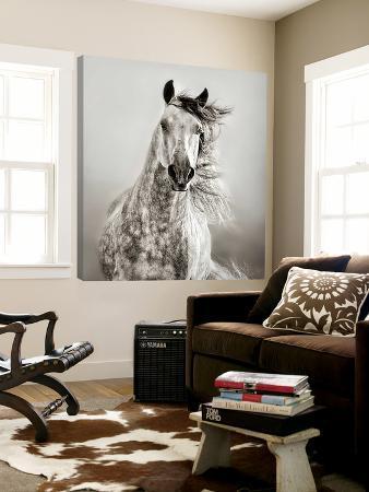 lisa-dearing-caballo-de-andaluz