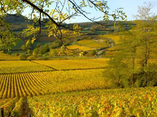lisa-s-engelbrecht-autumn-morning-in-pouilly-fuisse-vineyards-france