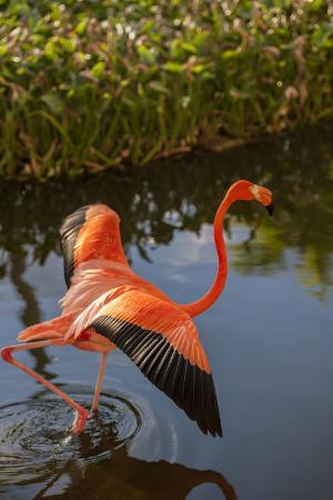 lisa-s-engelbrecht-pink-flamingo-bavaro-higuey-punta-cana-dominican-republic