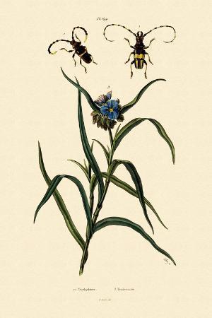 longhorn-beetles-1833-39