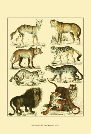 lorenz-oken-oken-lion-and-tiger