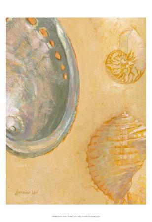 lorraine-vail-shoreline-shells-v