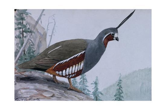 louis-agassi-fuertes-a-painting-of-a-single-mountain-quail