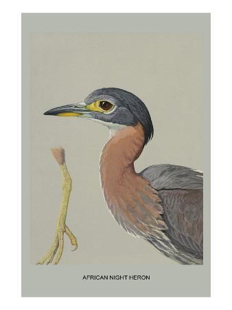 louis-agassiz-fuertes-african-night-heron