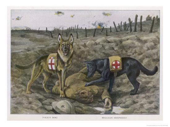 louis-agassiz-fuertes-two-red-cross-rescue-dogs-a-german-shepherd