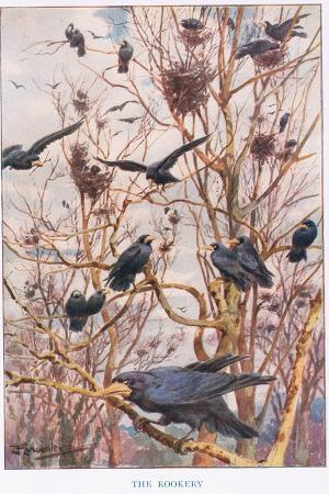 louis-fairfax-muckley-the-rookery-illustration-from-country-ways-and-country-days
