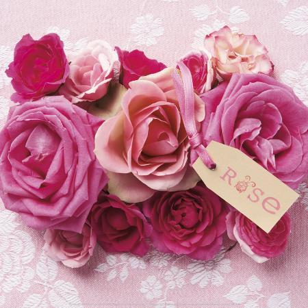 louis-gaillard-rose