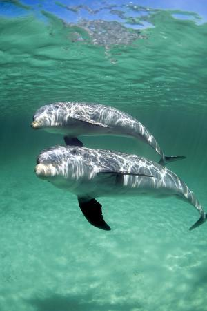 louise-murray-bottlenose-dolphins