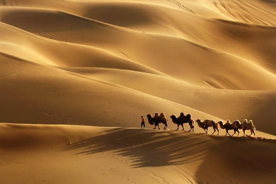 lu-jinrong-the-camel-walk-in-kumtag-desert