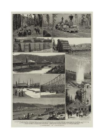 lumbering-in-california